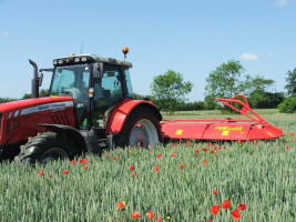 CTM Weed Surfer topping poppies in organic wheat crop